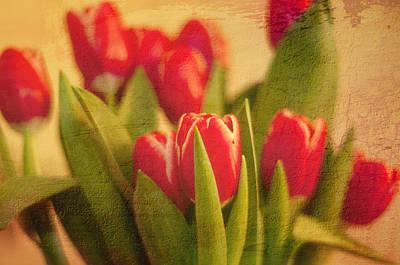 Tulips Art Print by Paul Davis