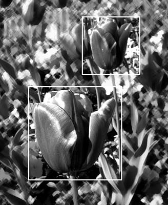 Photograph - Tulips by Roberto Alamino