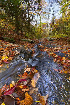 Tumbling Leaves Print by Debra and Dave Vanderlaan