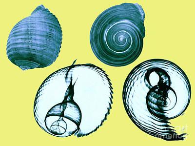 Tun Shell X-ray Art Print