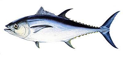 Tuna Art Print by Granger