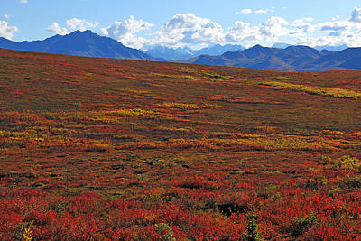 Photograph - Tundra Carpet by Alan Lenk