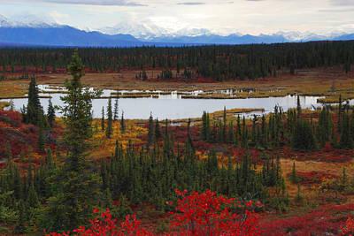 Photograph - Tundra Landscape by Alan Lenk