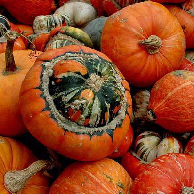 Halloween Photograph - Turban Squash by LeeAnn McLaneGoetz McLaneGoetzStudioLLCcom