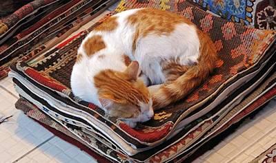 Photograph - Turkish Carpet Seller by Ian  MacDonald