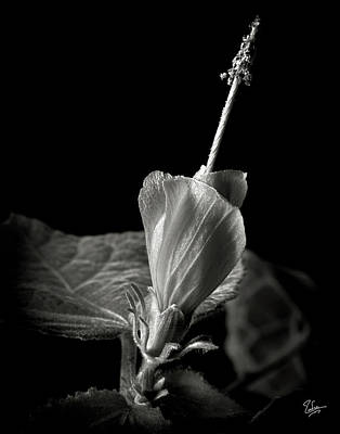 Photograph - Turk's Cap In Black And White by Endre Balogh
