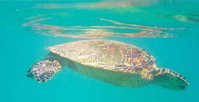 Photograph - Turtle 2 by Erika Swartzkopf