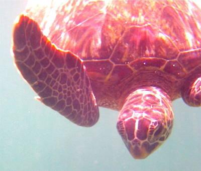 Photograph - Turtle 5 by Erika Swartzkopf