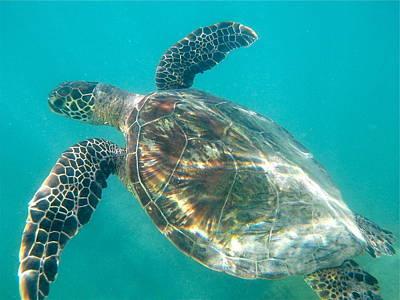 Photograph - Turtle 7 by Erika Swartzkopf