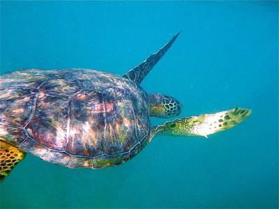 Photograph - Turtle 9 by Erika Swartzkopf