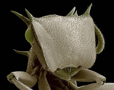 Turtle Ant's Head, Sem Art Print by Steve Gschmeissner