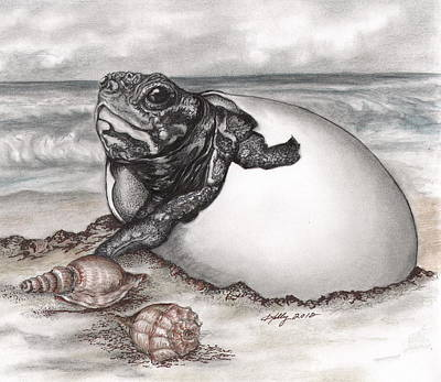 Drawing - Turtle Beach by Kathleen Kelly Thompson
