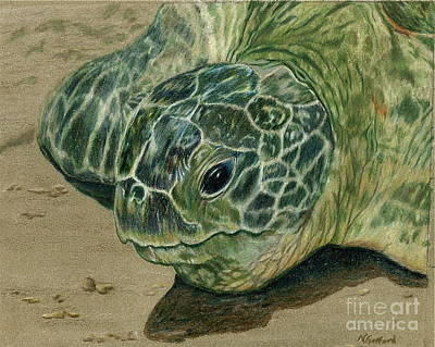 Painting - Turtle Beach by Norma Gafford