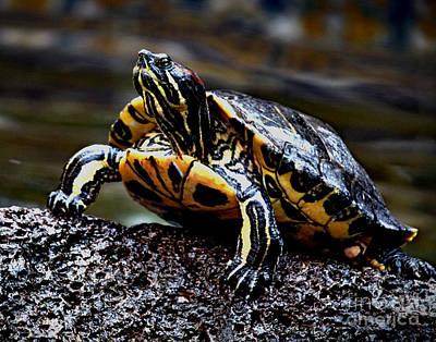 Photograph - Turtle by Danuta Bennett