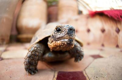 Y120831 Photograph - Turtle by Nilton Sergio Ramos Quoirin