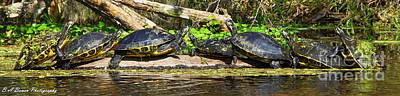 Photograph - Turtle Panorama by Barbara Bowen