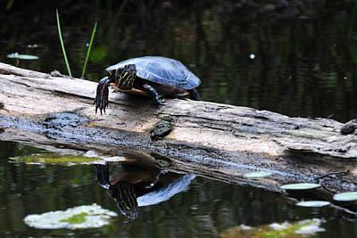 Turtle Reflected Art Print