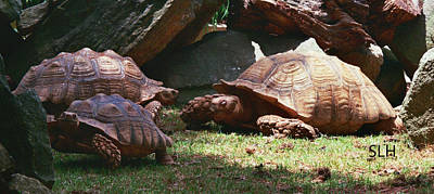 Photograph - Turtles by Lee Hartsell