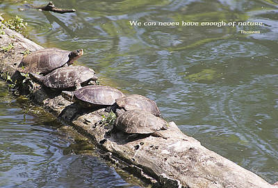 Photograph - Turtles On A Log by Mick Anderson