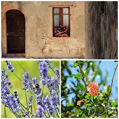 Lavender Wall Art - Photograph - #tuscany #toscana #fiori #flower by Pier Paolo Cristaldi