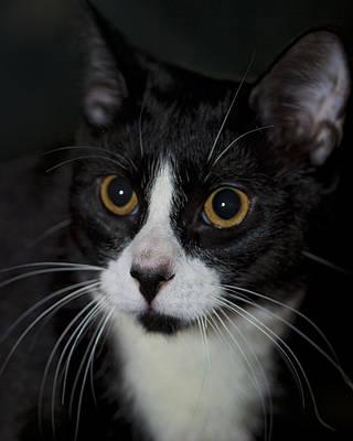 Photograph - Tuxedo Cat by Gregory Scott
