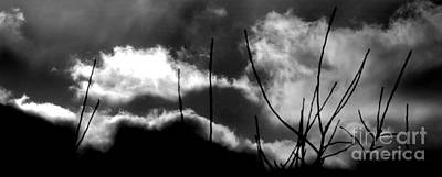 Photograph - Twigs In Clouds by Michael Canning