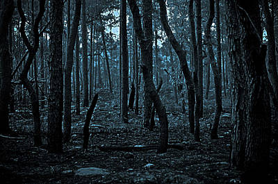 Art Print featuring the photograph Twilight In The Smouldering Forest by DigiArt Diaries by Vicky B Fuller