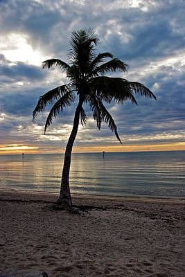 Photograph - Twilight Palm Tree Key West Florida by John Stephens