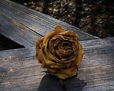 Photograph - Twilight Rose by Barry Doherty