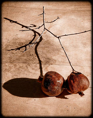 Photograph - Albuquerque, New Mexico - Twin Pomegranates by Mark Forte