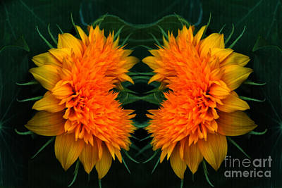 Teddybear Photograph - Twin Teddybear Sunflowers by Marjorie Imbeau