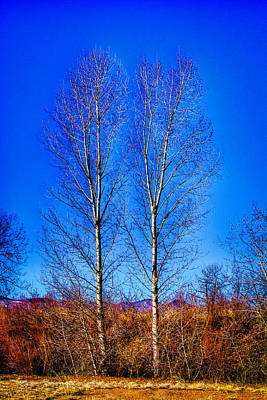 Photograph - Twin Trees At South Platte Park by David Patterson