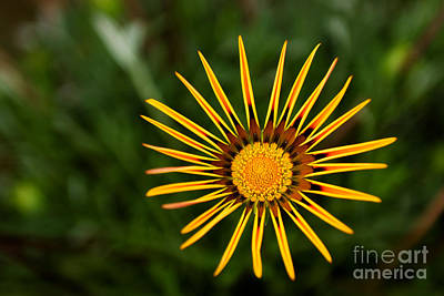 Fine Art Choices Photograph - Twinkle Twinkle by Syed Aqueel