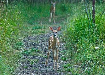 Twin Fawns Photograph - Twins 8284 by Michael Peychich
