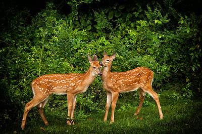 Photograph - Twins by Karol Livote