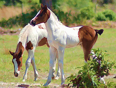 Pinto Horses Photograph - Twins by Sandy Poore