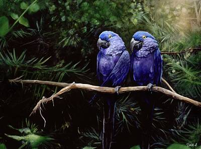 Macaw Painting - Twins by Steve Goad