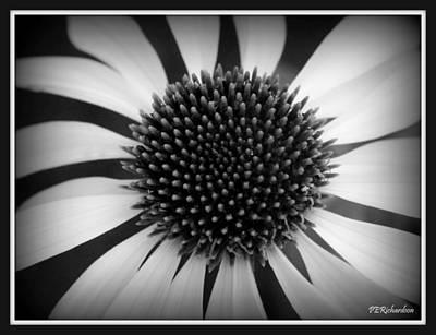 Photograph - Twirl by Priscilla Richardson