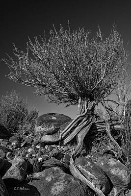Photograph - Twisted Beauty - Bw by Christopher Holmes