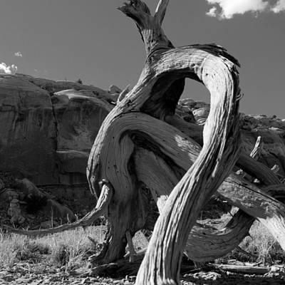 Twisted Root Art Print by Dale Davis