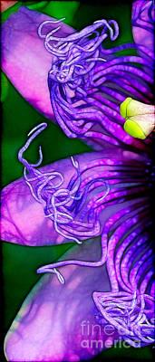 Twisted Shadows Art Print by Judi Bagwell