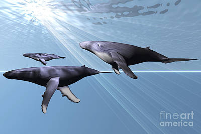 Youth Digital Art - Two Adult Humpback Whales With A Small by Corey Ford