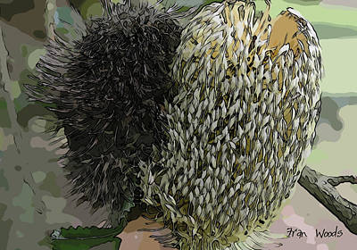 Digital Art - Two Banksia by Fran Woods