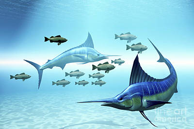 Two Blue Marlins Circle A School Art Print by Corey Ford