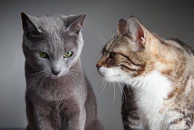 Elegant Cat Photograph - Two Cats by Nailia Schwarz