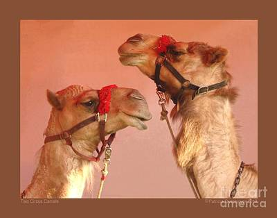 Two Circus Camels Art Print by Patricia Overmoyer