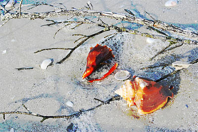 Two Conch Shells With Branch Art Print by Olivia Novak