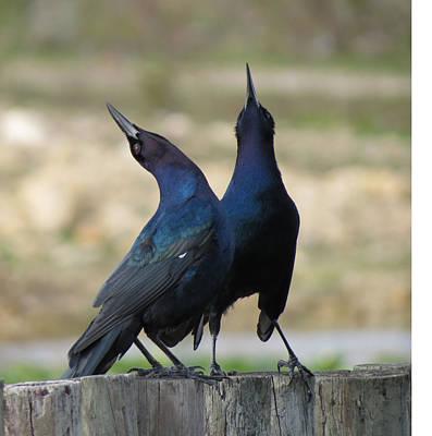Two Crows Art Print