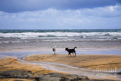 Two Dalmatian Photograph - Two Dogs Playing On The Beach by Kathleen Smith