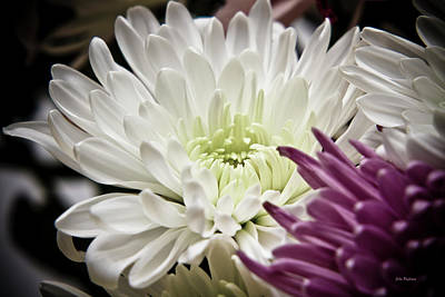 Photograph - Two Flowers by John Pagliuca